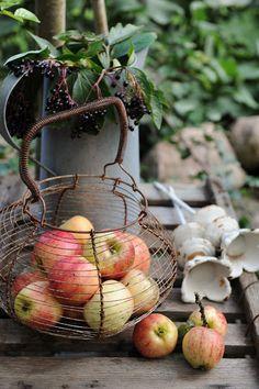 Apples in vintage basket
