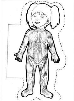 Free human body printables for kids. Body Preschool, Preschool Activities, Montessori Classroom, My Themes, Science And Nature, Pre School, Life Skills, Teaching Kids, Human Body