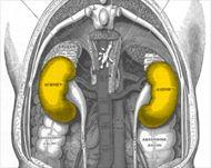 Los cálculos renales pueden llegar a ser muy dolorosos. Aquí damos algunos remedios caseros y naturales para eliminar las piedras en los riñones.