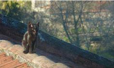Gatito en el tejado