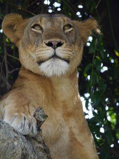 Africa | 'The Queen', Queen Elizabeth National Park, Uganda | ©Annegien Schonis