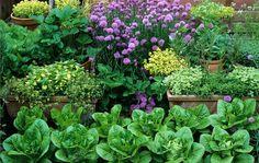 I na malém prostoru se dá pěstovat zelenina, ovoce i bylinky