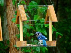 Hanging Wood Bird Feeder Platform Style Has Open Fly Through Design, Clear Food…