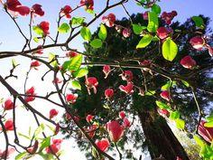 Parco botanico del #Gambarogno #visitTicino #myasconalocarno