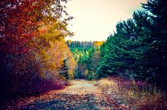 More colorful paysage of the abandoned road in Saint-Quentin, New-Brunswick, Canada