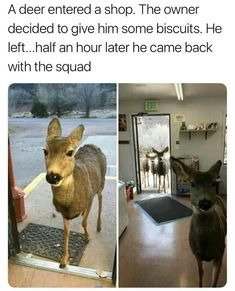 A deer entered a shop. The owner decided to give him some biscuits. He left...half an hour later he came back with the squad.