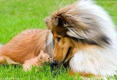 http://nationalanimals.com/emotional-friendship-between-animals-photos/