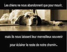 LA TOUSSAINT DES ANIMAUX...POURQUOI PAS !