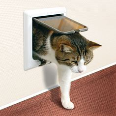 Trixie Pet Products 4 Way Cat Door with Tunnel