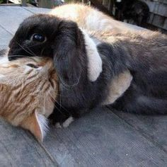 Kitty and bunny love each other!
