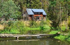 41 Degrees South Tasmanian Salmon Ponds, Ginseng Farm & Wetlands.  Near Deloraine.  Photo by Dan Fellow.