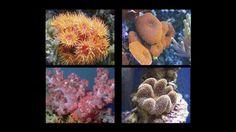 Данное учебное видео рассказывает об основах освещения для морских аквариумов и описывает интерфейс контроллера True Spectrum, а также показывает как наилучш...