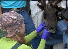 Animal Dentistry on Dr. Oakley, Yukon Vet