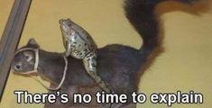 Stupid Memes, Dankest Memes, Funny Memes, Animal Memes, Funny Animals, Cute Animals, Haha Funny, Hilarious, Cute Frogs