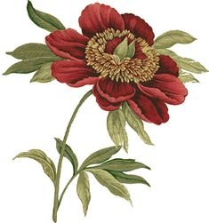 Red flower illustrations
