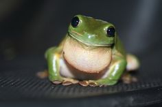 Animal Spirit Guides Meanings: Frogs, Lizards, and Snakes Oh My!