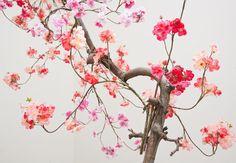 bloesemboom tricolore