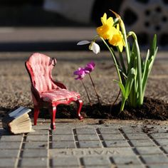 The Pothole Gardener – Steve Wheen