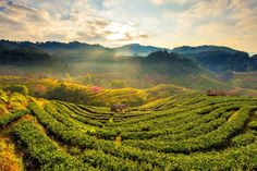 Tea Plantations in the Western Ghats ~ http://suitcasesandsunsets.com/the-western-ghats.html