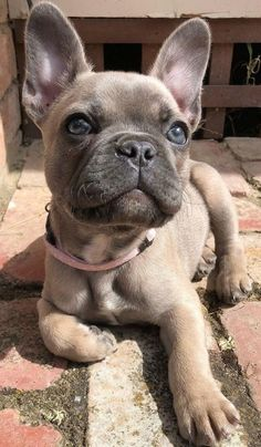 Super Cute Puppies, Cute Baby Dogs, Cute Little Puppies, Cute Dogs And Puppies, Cute Little Animals, Cute Funny Animals, Doggies, Baby Pugs, Baby Animals Pictures