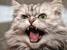 Google+ Here Kitty Kitty.