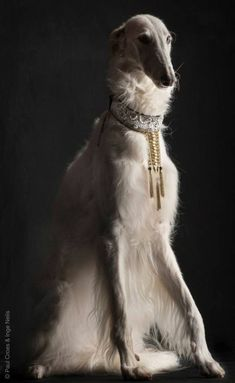 Russian Aristocracy - Borzoi - Wolfhound - From Russia With Love - Borzois , dog. - Pampered Pet's Complete Guide to a Safe Summer with Pets Beautiful Dogs, Animals Beautiful, Beautiful Pictures, Animals And Pets, Cute Animals, Borzoi Dog, Whippets, Russian Wolfhound, Tier Fotos