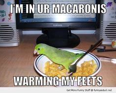 I'm not sure why, but this gets me every time and I can't stop laughing.... #imweird