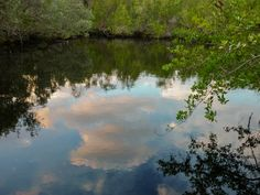 Cenote ubicado en el interior de #Cayococo