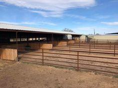 Horse Farm Layout, Barn Layout, Barn Stalls, Horse Stalls, Small Horse Barns, Horse Pens, Horse Barn Designs, Cattle Barn, Dressage