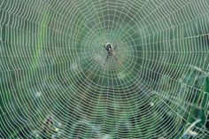 Different Types of Spider Webs - Tony Hakim | Animals