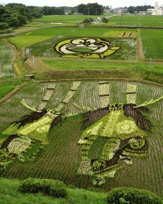 rice paddy art- planting different varieties, as the plants grow the image appears
