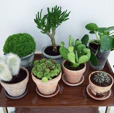 bird view: cactus, pilea plants