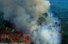rainforest destruction - Google Search