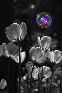This is a great example of emphasis, I think this because the bubble is all different colors. The flowers are black and white, but yet the bubble stands out.