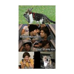 KEVIN IS DEAD Kevin The Pigeon ❤ liked on Polyvore featuring one direction, 1d, quotes and funny