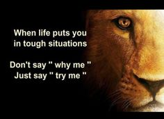 Why lie to a Lion