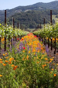 grew up visiting this frequently - still one of my most favorite places in the world --> Sonoma County