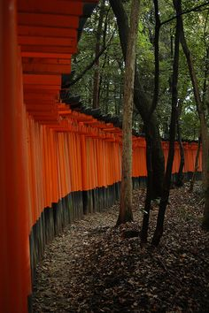 Fushimi-Inari-Taisha Shrine (伏見稲荷大社)