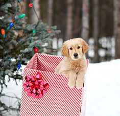 What's better than a puppy for Christmas?
