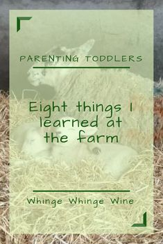 things I learned at the farm Eight things I learned at the farm; things I discovered about toddlers on a family trip!On On, on, or ON may refer to: Parenting Toddlers, Kids And Parenting, Parenting Hacks, Parenting Quotes, Raising Boys, Best Blogs, Mom Advice, First Time Moms, Mom Humor