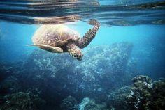 Turtle Cove, HI