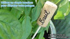 Etiquettes pour identifier les plantes, fruits et légumes du jardin et du potager