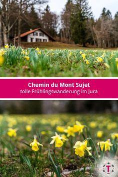 Switzerland, Wonderland, Herbs, Law School, Herb, Medicinal Plants