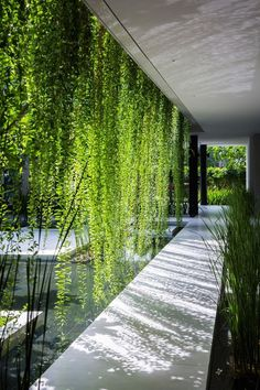 Vertical garden of a spa in Vietnam - great idea to borrow! - Vertical garden of a spa in Vietnam – great idea to borrow! More more Vertical garden of a spa in -