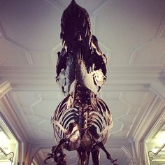 A view from below... Stan, our T. rex - by @steperu
