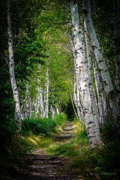 island of silence — breathtakingdestinations:   Acadia National Park -...