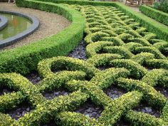 Fancy hedges at Highnam Court Gardens, Gloucester.in-gloucester… Boxwood Garden, Garden Hedges, Topiary Garden, Garden Art, Garden Landscaping, Garden Design, Landscaping Ideas, Parks, Gardens Of The World