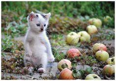 Lovely-KittyCats, (via)