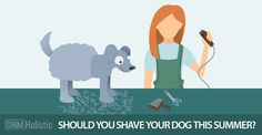 How to shave a dog in the summer? DON'T! There are much better ways to keep your dog cool -- without messing with his coat.