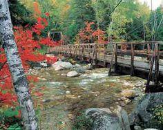 Footbridge To Nature | 1000 Piece Jigsaw Puzzle